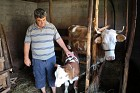 Thanks to you, Milan received a cow for Pascha!